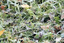 winterhimmeleisblumen-07